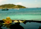 Thumbnail Vietnames lilly