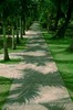Thumbnail green path