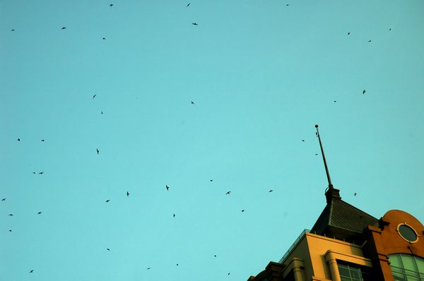 Product picture birds circling above